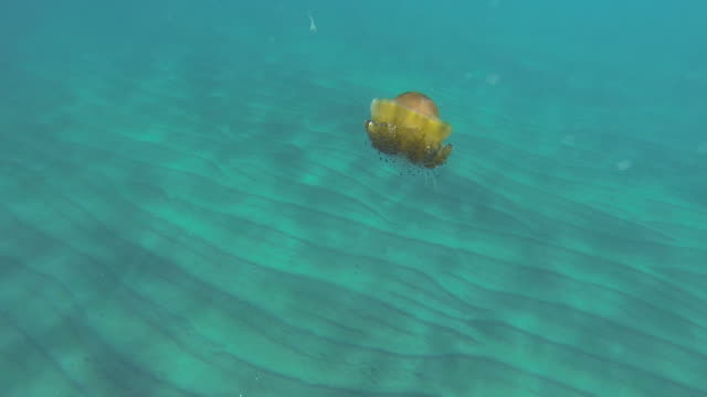 Jellyfish swimming under water surface in the Mediterranean