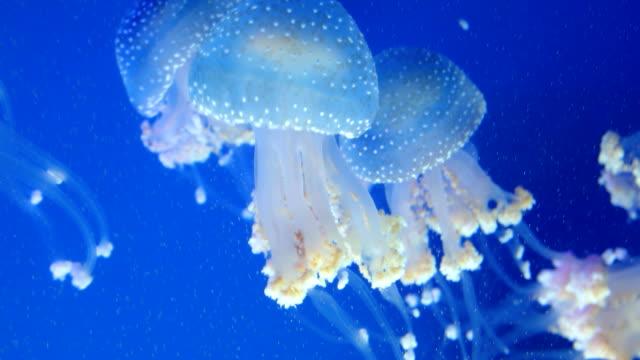jellyfish swimming underwater - aquatic organism stock videos & royalty-free footage