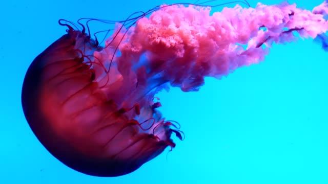 jellyfish underwater - jellyfish stock videos & royalty-free footage