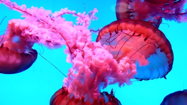 jellyfish underwater - deep stock videos & royalty-free footage