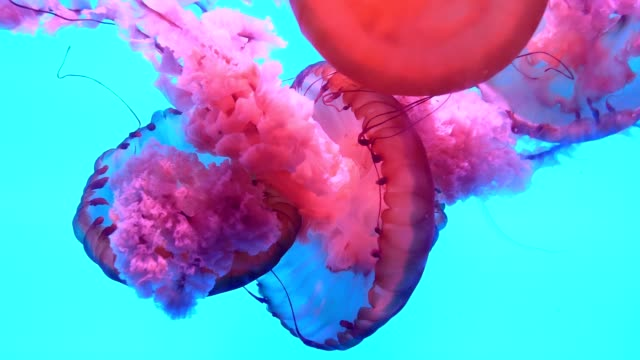 jellyfish underwater - poisonous stock videos & royalty-free footage
