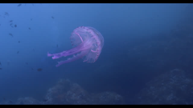 jellyfish - sea life park stock videos & royalty-free footage