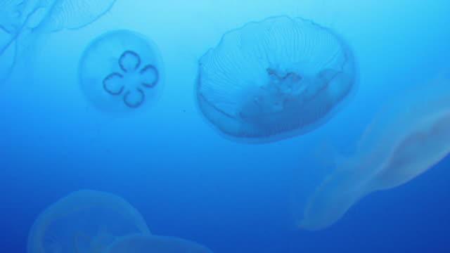 stockvideo's en b-roll-footage met jellyfish - kleine groep dieren