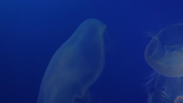 jellyfish - medium group of animals stock videos & royalty-free footage