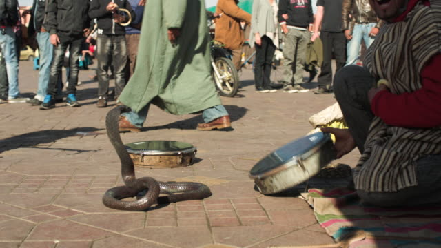 jemaa el fna. snake charmer. marrakech. - moroccan culture stock videos & royalty-free footage
