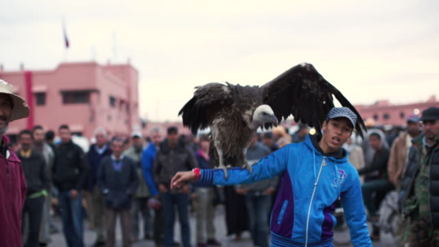 Jemaa el fna. Vulture. Marrakech.