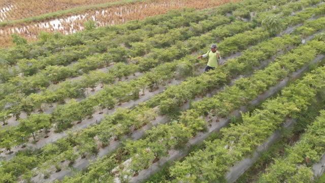 jember landscape, east java indonesia. - east java province stock videos & royalty-free footage