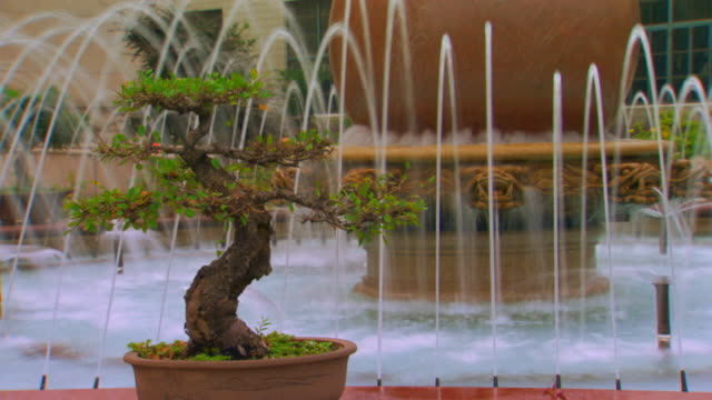 492 Bonsai Tree Videos And Hd Footage Getty Images