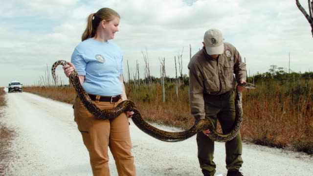 jenny ketterlin eckles a nonnative wildlife biologist and edward mercer nonnative wildlife technician both with the florida fish and wildlife... - miami dade county stock videos and b-roll footage