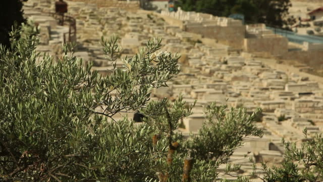 jerusalem cemetery on the mount of olives - jerusalem old city stock videos and b-roll footage