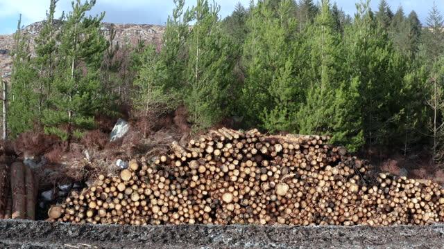 vídeos y material grabado en eventos de stock de inyección de madera apilada frente al bosque - jib shot
