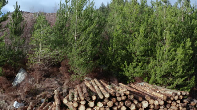 vídeos y material grabado en eventos de stock de inyección de madera apilada lista para la recolección - jib shot