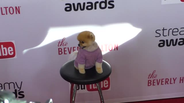 Jiff Pom at The 6th Annual Streamy Awards Hosted By King Bach And Live Streamed On YouTube at the Beverly Hilton Hotel in Beverly Hills in Celebrity...