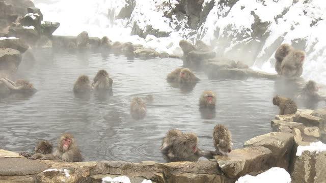 Jigokudani Monkeys in Nagano, Japan