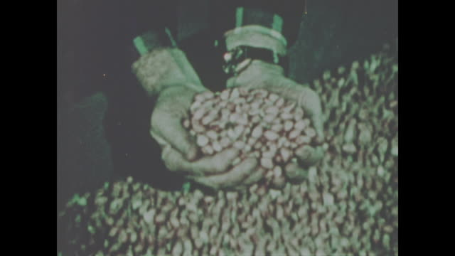 jimmy carter inspects peanuts at processing plant no sound available - präsident stock-videos und b-roll-filmmaterial