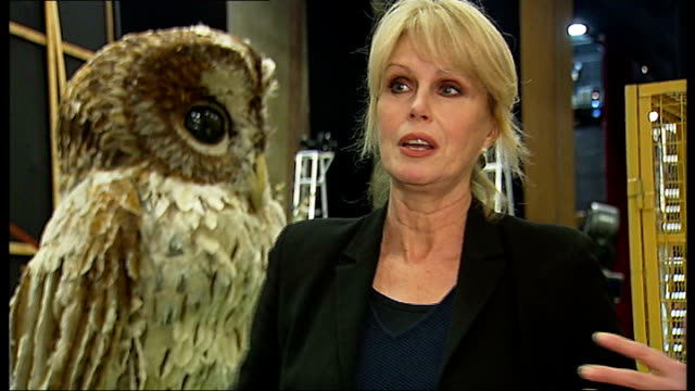 joanna lumley interview sot reporter to camera - joanna lumley stock videos & royalty-free footage