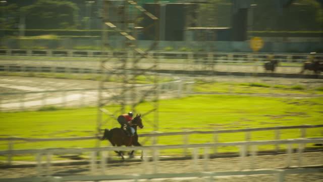 sts_sp_joquei_005 jockey club sao paulo - pferderennbahn stock-videos und b-roll-filmmaterial