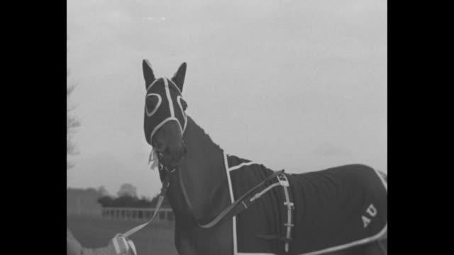 jockey gerry wilson walks golden miller across a field / cu golden miller / steeplechase 2 horses and jockeys go down / jockeys get up and walk away - steeplechase stock videos and b-roll footage
