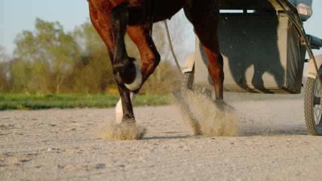 SLO MO Jockey opleiding van een paard voor harness racing