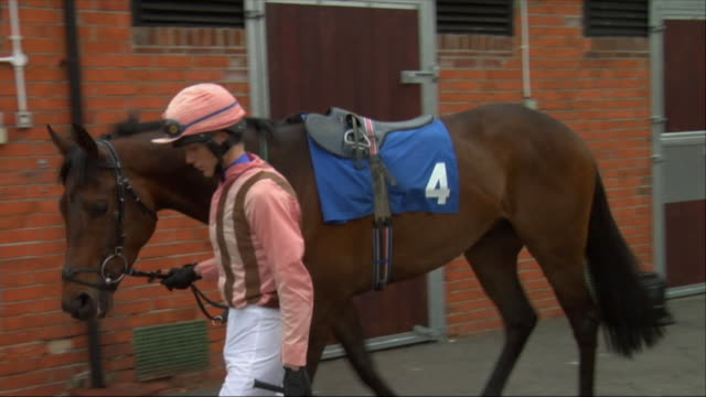 vídeos de stock e filmes b-roll de ms jockey walking with horse past stable / newbury, england, uk - número 4