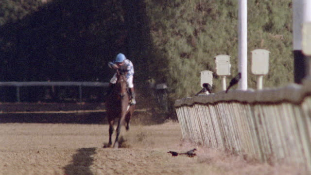 stockvideo's en b-roll-footage met a jockey whips his horse repeatedly down the homestretch. - jockey