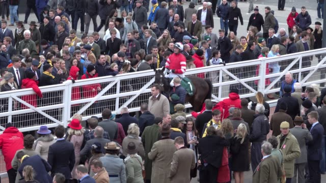 jockeys and horses return to the parade ring after the last race of the day at cheltenham racecourse on march 14 2018 in cheltenham england thousands... - cheltenham racecourse stock videos and b-roll footage