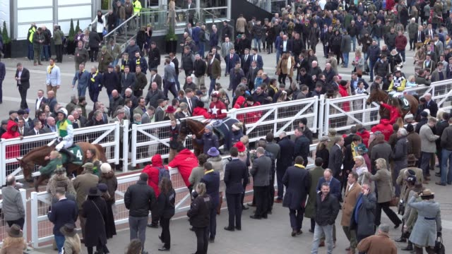 vídeos de stock, filmes e b-roll de jockeys and horses return to the parade ring after the last race of the day at cheltenham racecourse on march 14, 2018 in cheltenham, england.... - cheltenham