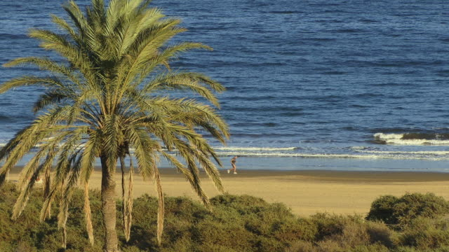 WS Joggers running along beach with palm tree in foreground / Maspalomas, Gran Canaria, Spain