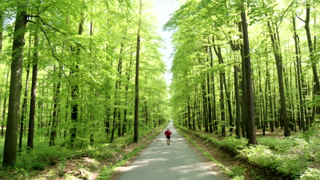hd crane: joggen auf dem forest road - vorderansicht stock-videos und b-roll-filmmaterial
