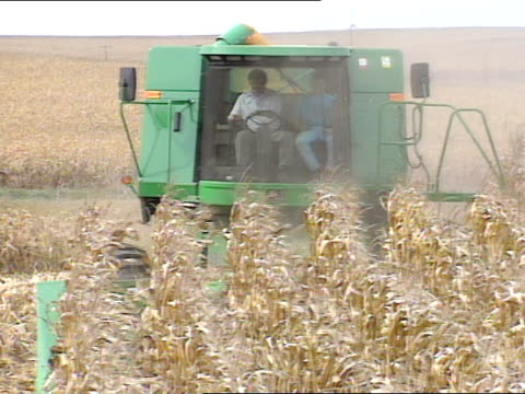john deere combine moving down through dried corn stalks in field, cutting stalks, corn cutting loading into top, passing cut rows of corn field.... - combine harvester stock videos & royalty-free footage
