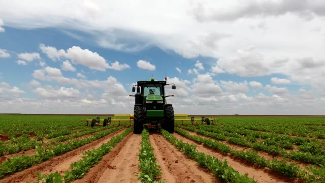 stockvideo's en b-roll-footage met john deere in a peanut field - tractor