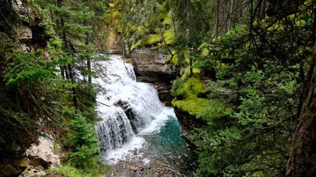 johnston canyon with waterfall flowing in deep forest at banff national park - waterfall stock videos & royalty-free footage