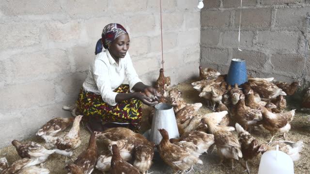 brac project. josepha gerald mwalongo, poultry farmer and poultry demonstration teacher. - ブラック島点の映像素材/bロール