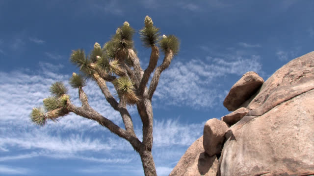 joshua tree and granite time lapse - palm springs california stock videos & royalty-free footage