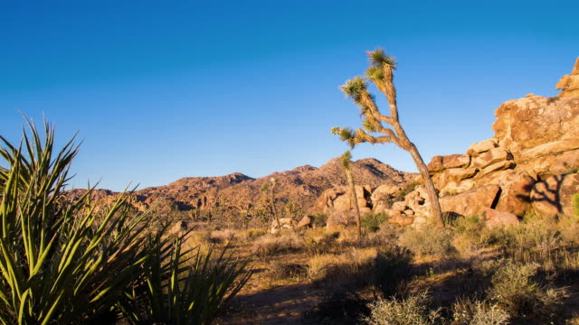 ds joshua tree at national park - natural landmark stock videos & royalty-free footage