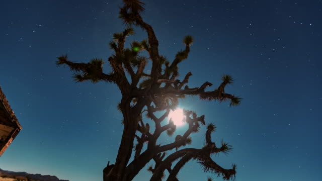 joshua tree at night - joshua tree national park stock videos & royalty-free footage