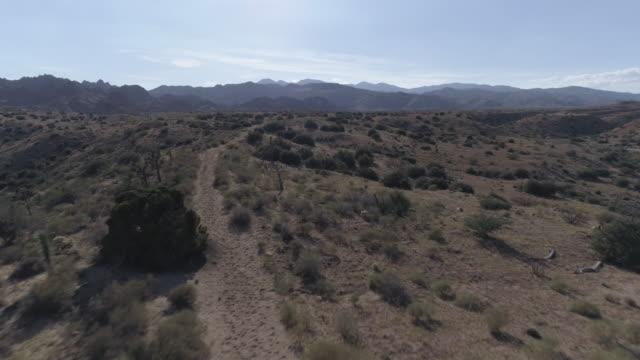 vídeos de stock e filmes b-roll de joshua tree desert aerial - árvore de joshua