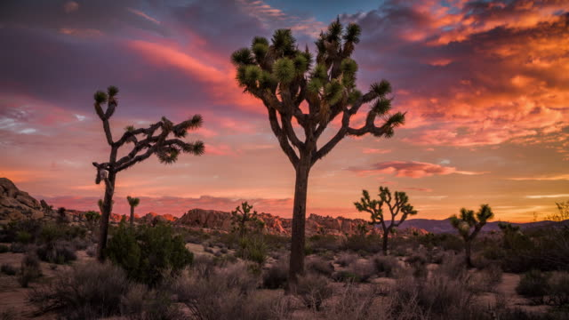 Joshua Tree desert landscape at Sunset