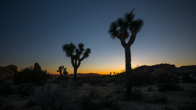 joshua tree desert landscape in twilight - tracking shot - palm springs california stock videos & royalty-free footage