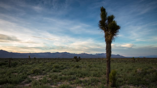Joshua Tree in Mojave Desert - Time Lapse