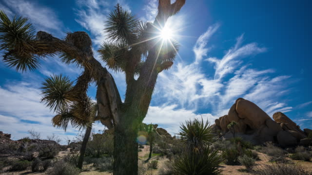 joshua tree in the desert - time lapse tracking shot - tracking shot stock videos & royalty-free footage