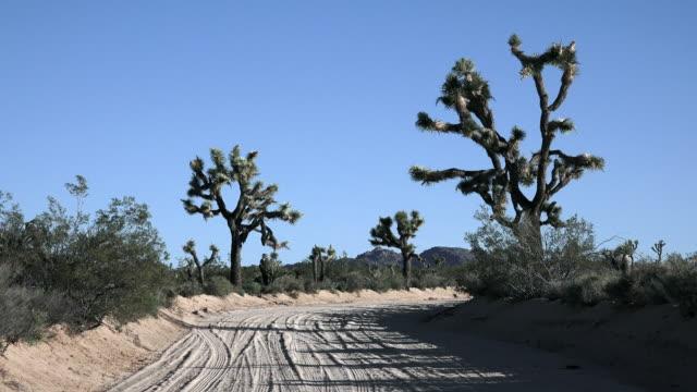 joshua tree landscape with joshua trees along dirt road, zoom in, national park - 熱帯の低木点の映像素材/bロール