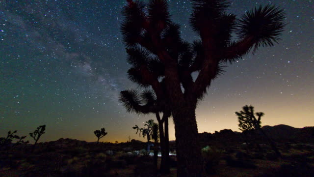 joshua tree national park at night. 4k. - joshua tree national park stock videos & royalty-free footage