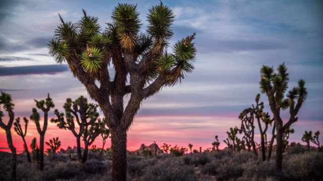 joshua tree national park at twilight, california - cactus sunset stock videos & royalty-free footage