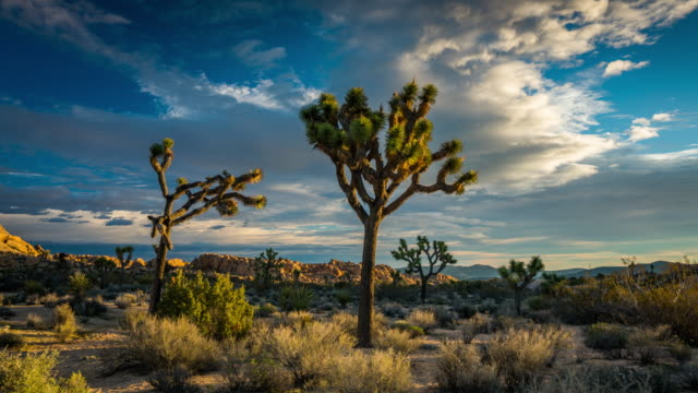 TIME LAPSE: Joshua Tree National Park, California