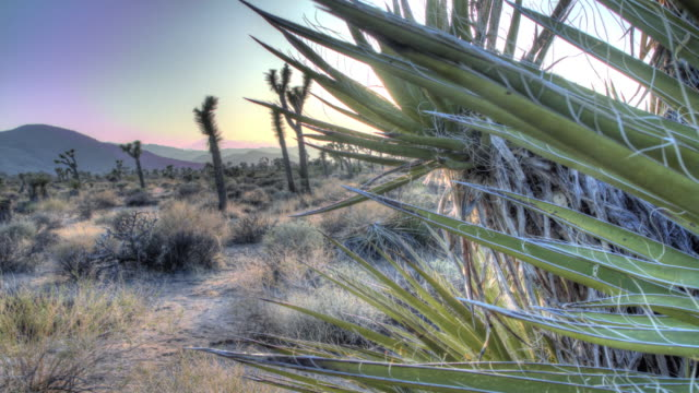joshua tree national park. sunset. 4k. - cactus sunset stock videos & royalty-free footage