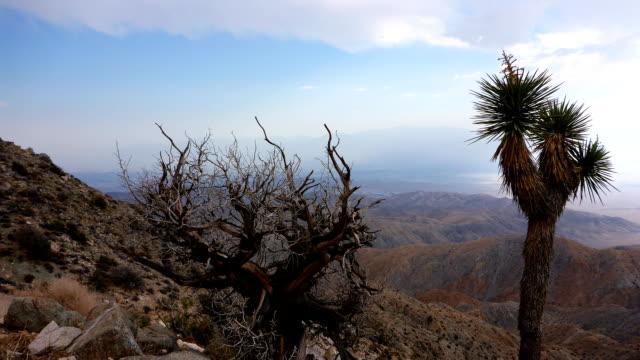 parco nazionale joshua tree time lapse - faglia di sant'andrea video stock e b–roll