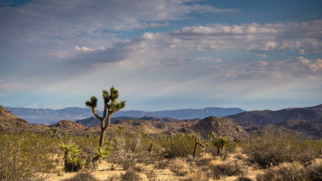 joshua tree national park - time lapse - southern california stock videos & royalty-free footage