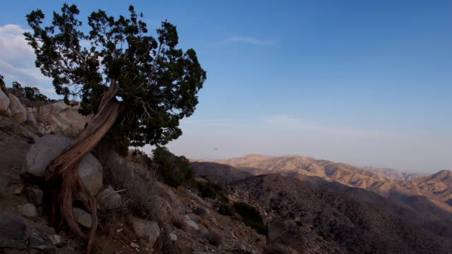 joshua tree national park time lapse with juniper in foreground - joshua tree stock videos and b-roll footage