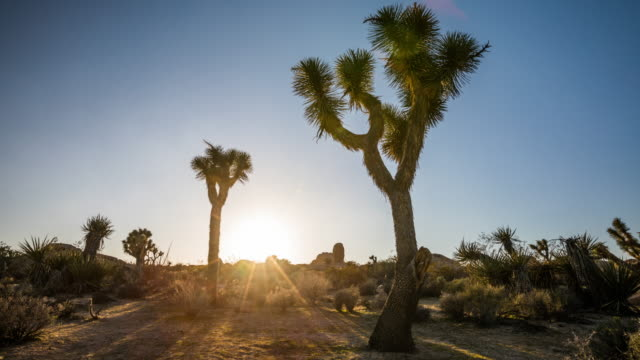 joshua tree national park - tracking shot - joshua tree national park stock videos & royalty-free footage